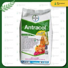 Antracol 70 WP 1Kg